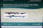 Management Plan for the Bluntnose Sixgill Shark (Hexanchus griseus) and Tope Shark (Galeorhinus galeus) in Canada