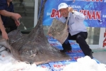 Big Ray caught in Turkey by commercial fishermen in the Sea of Marmara