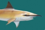 Conservation Authority Guy Harvey Reiterates Shark Free Marina Policies