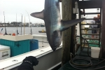 Montauk Marine Basin 41st Annual Shark Tag Tournament