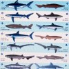 Sharks of British Columbia