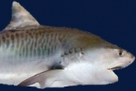 Florida FWC surveys on shark fishing changes