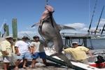 Edisto Shark Tournament 2011