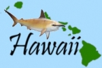 Hawaii considers penalties for 'harming' sharks and rays