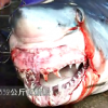 Shark Video of Sharks at fish market in Taiwan
