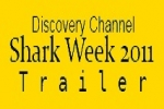 Shark Week 2011: How To Ship a Shark