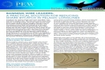 Banning Wire Leaders  A practical solution for reducing shark bycatch in pelagic longlines