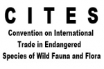 CITES Sharks on the Agenda of the 25th Meeting of the Animals Committee