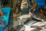 Shark Fishing Vessel captured in Galapagos