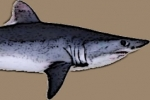 U.S. Federal government must reconsider porbeagle protection, says court