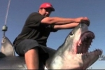 California Anglers catch 11 foot shortfin mako shark