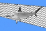 AUS: Exemption granted for NSW shark net trial