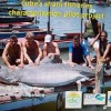 Cuba s shark fisheries characterization pilot project