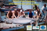 Cuba s shark fisheries characterization pilot project