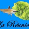 Réunion Island: Teenage Boy Killed in Shark Attack off Cap Homard