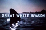 Shark Week 2011 – Great White Invasion – Paddling With a Shark