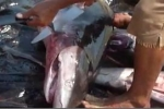 Part2 Shark Fishing in San Agustinillo Mexico