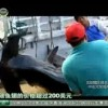Chinese TV about Shark Finning