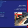 Shark Video Spanish Shark Fishery Shark Video