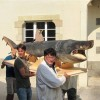 Basking Shark Mount for Museum in France