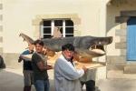 Basking Shark Mount for Museum in France