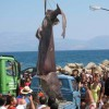 Greek fishermen catch big shark