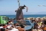 Greek fishermen catch big shark