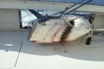 Outcast Mega Shark Tournament 2011