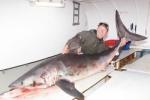 Record Porbeagle Shark in Denmark