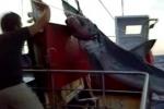 Mako Shark 3.55 metres 400 kg