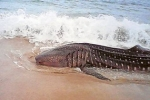 Public urged to report whale shark sightings
