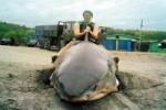 Scientists refute report of White Shark capture in Russia