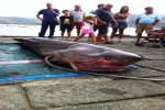 Sixgill Shark caught in Italy
