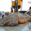 Whale Shark caught in China