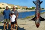 Thresher Shark caught in France