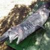 Goblin Shark caught in Brazil