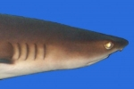 Fishing Leads to Significant Shark Population Declines