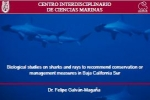 Biological studies on sharks and rays in Mexico