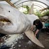 Replica of Huge White Shark in Germany