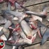 Costa Rican delegate comments on shark massacre in Colombia