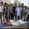 Sixgill Shark caught in Turkey
