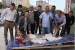 Sixgill Shark caught in Turkey