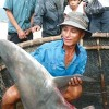 Shark Finning in Vietnam