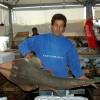 Guitarfish caught in Turkey