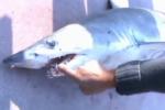Turkish Fisherman Captures Mako Shark
