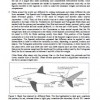 EU Shark Finning Proposal – Working Paper