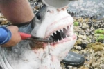 Fury on Facebook over great white exposé