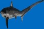 Sri Lanka Protects Thresher Sharks