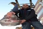 New record of a Sixgill Shark from Turkey