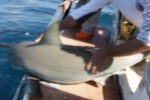 Trailer of one of Shark Year Magazines co-owners Al Brenneka.